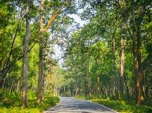 Вымощенная дорога которая режет до конца лес свежего зеленого дерева Стоковое Изображение RF
