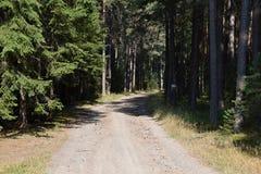 Вымощенная дорога леса на солнечный день Стоковое Изображение