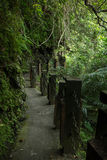 Вымощенный путь в лесе с пышной растительностью Стоковые Изображения