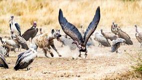 Выносители в Кении Африке Стоковые Изображения RF