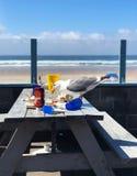 Выноситель чайки на столе для пикника на пляже стоковое фото
