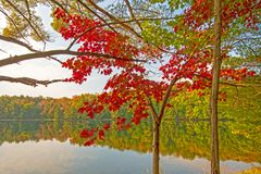 Выплеск красного цвета в лесе стоковое фото rf
