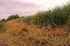 Выполите управление вокруг поля продукции путем использование гербицида стоковые фото