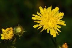 выполите желтый цвет Стоковое Изображение