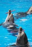 Выполнять дельфина стоковые фотографии rf