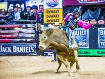 Выпускные экзамены мира катания быка PBR Стоковые Фотографии RF