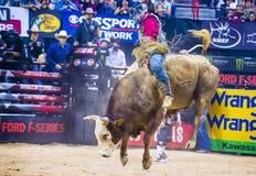 Выпускные экзамены мира катания быка PBR Стоковые Изображения