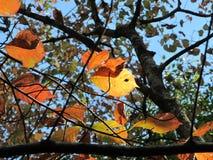 Выплеск цвета падения Стоковое Изображение RF