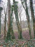 Выравнивание леса Стоковое Изображение
