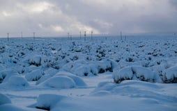 выравниваться снежный Стоковое фото RF