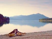 Выравнивать берег озера Альп Пляж с мертвым пнем дерева Стоковая Фотография