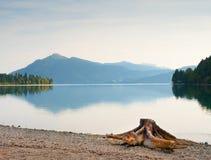 Выравнивать берег озера Альп Пляж с мертвым пнем дерева Стоковое Изображение