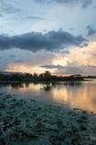 Выравнивать болото Стоковые Фото