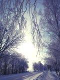 выравнивать ветви березы в снеге стоковое фото