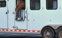 Выражения лошади Стоковое Изображение