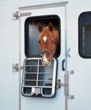 Выражения лошади Стоковые Фото