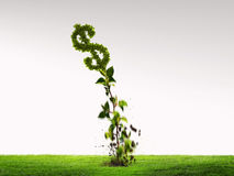 Вырастите ваш доход стоковое фото rf