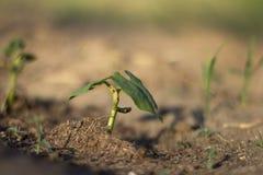 Вырастите в почве стоковые фото