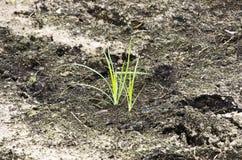 Вырастите горизонтальный стоковое фото rf