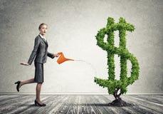 вырастите заработайте деньги вашей Стоковые Изображения