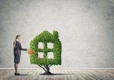 вырастите заработайте деньги вашей стоковое изображение rf
