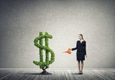 вырастите заработайте деньги вашей стоковая фотография rf