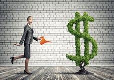 вырастите заработайте деньги вашей стоковые фотографии rf