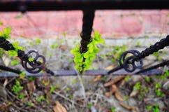 Вырастите и зеленые лист стоковая фотография rf