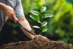 Вырастите маракуйя, засадите дерево в природе стоковые изображения