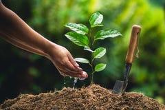 Вырастите маракуйя, засадите дерево в природе стоковое фото rf