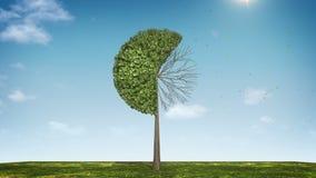 Вырастите долевая диограмма формы дерева показанный 60 процентов зеленая икона иллюстрация штока