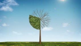 Вырастите долевая диограмма формы дерева показанный 30 процентов зеленая икона сток-видео