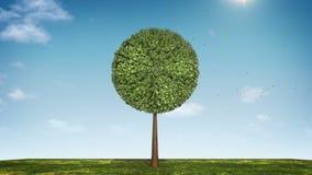 Вырастите долевая диограмма формы дерева показанный 100 процентов зеленая икона бесплатная иллюстрация