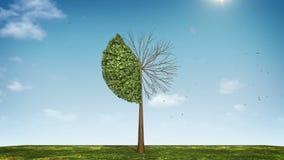 Вырастите долевая диограмма формы дерева показанный 40 процентов зеленая икона иллюстрация вектора