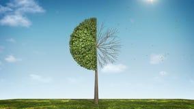 Вырастите долевая диограмма формы дерева показанный 50 процентов зеленая икона иллюстрация вектора