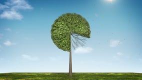 Вырастите долевая диограмма формы дерева показанный 80 процентов зеленая икона иллюстрация вектора