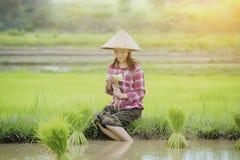 Вырастите рис стоковые изображения rf