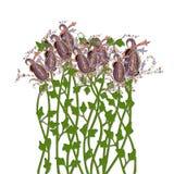 вырастите paisley стоковая фотография rf