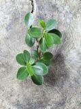 Выращивание растения на древесине Стоковое Фото