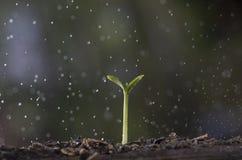 Выращивание растения от дерева семени в предпосылке природы стоковые фото