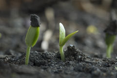 Выращивание растения от дерева семени стоковое изображение rf