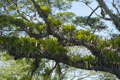 Тропический дождевый лес 3 Стоковое Фото