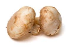 2 выращиванных в питательной среде: гриба на белой предпосылке Стоковая Фотография RF
