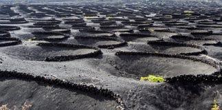 выращивающее Вин Ла Geria зоны на острове Лансароте Стоковые Фотографии RF
