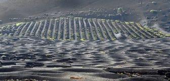 выращивающее Вин Ла Geria зоны на острове Лансароте Стоковое фото RF