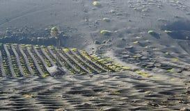 выращивающее Вин Ла Geria зоны на острове Лансароте Стоковая Фотография