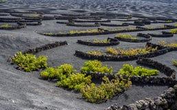 выращивающее Вин Ла Geria зоны на острове Лансароте Стоковые Фото