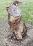 Вырезывание сухого пня дерева на поле грязи Стоковая Фотография