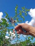 вырезывание bush подняло стоковые фотографии rf