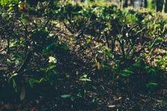 Вырезывания дерева в земле при новые листья приходя вне Стоковое Изображение RF